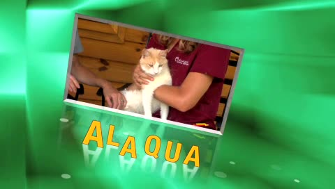 Alaqua TV  Pet Of  ...